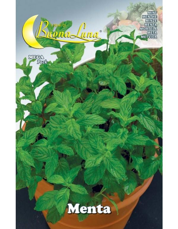 Semi orto Menta confezione 10 pezzi agricoltura giardinaggio