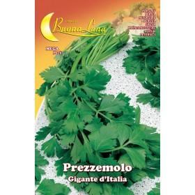 Semi orto Prezzemolo gigante conf 10 pezzi agricoltura giardinaggio