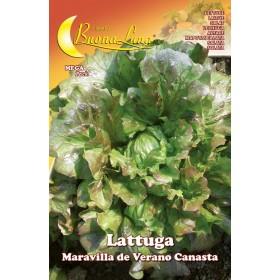 Semi orto Lattuga canasta confezione 10 pezzi agricoltura giardinaggio