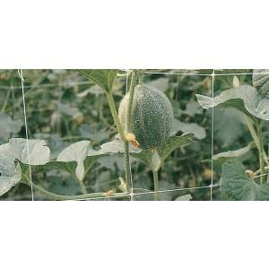 Rete sostegno per piante rampicanti rotolo m 2x50 colore bianco