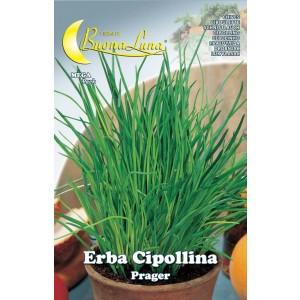 Semi orto Erba cipollina confezione 10 pezzi agricoltura giardinaggio