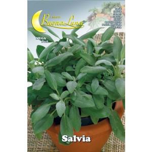 Semi orto Salvia confezione 10 pezzi agricoltura giardinaggio